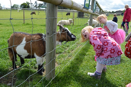 Children looking at animals through a fence, at Hatfield Park Farm